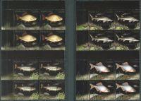 (2016) MiNr. 4861 - 4864 ** - 4 x 2 + 2,5 + 3,7 + 6 Zl - Polsko - 4-bl - Ohrožené druhy ryb
