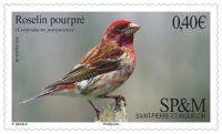 (2016) MiNr. 1241 ** - Saint Pierre a Miquelon - fialová pěnkava