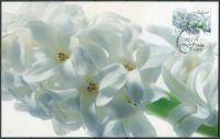 (2012) MiNr. 368 O - pohlednice a známka - Aland - Vánoce