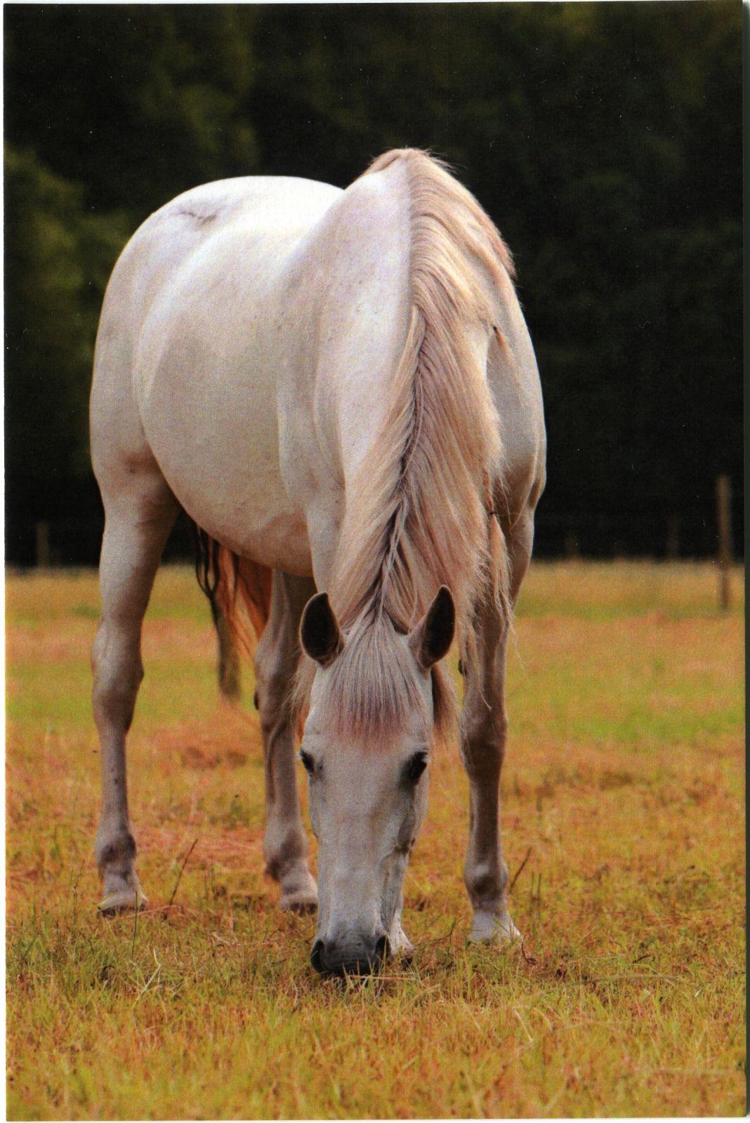 série koně - bělouš na pastvě (2/2018)